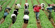 Migrant-Farm-Workers-Are-the-Backbone-of-the-Agricultural-Industry
