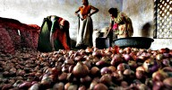 Workers fill sacks with onions after sorting them at a wholesale