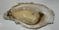 Beautiful-Opened-Oyster
