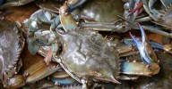Blue_crab_on_market_in_Piraeus_-_Callinectes_sapidus_Rathbun_20020819-317