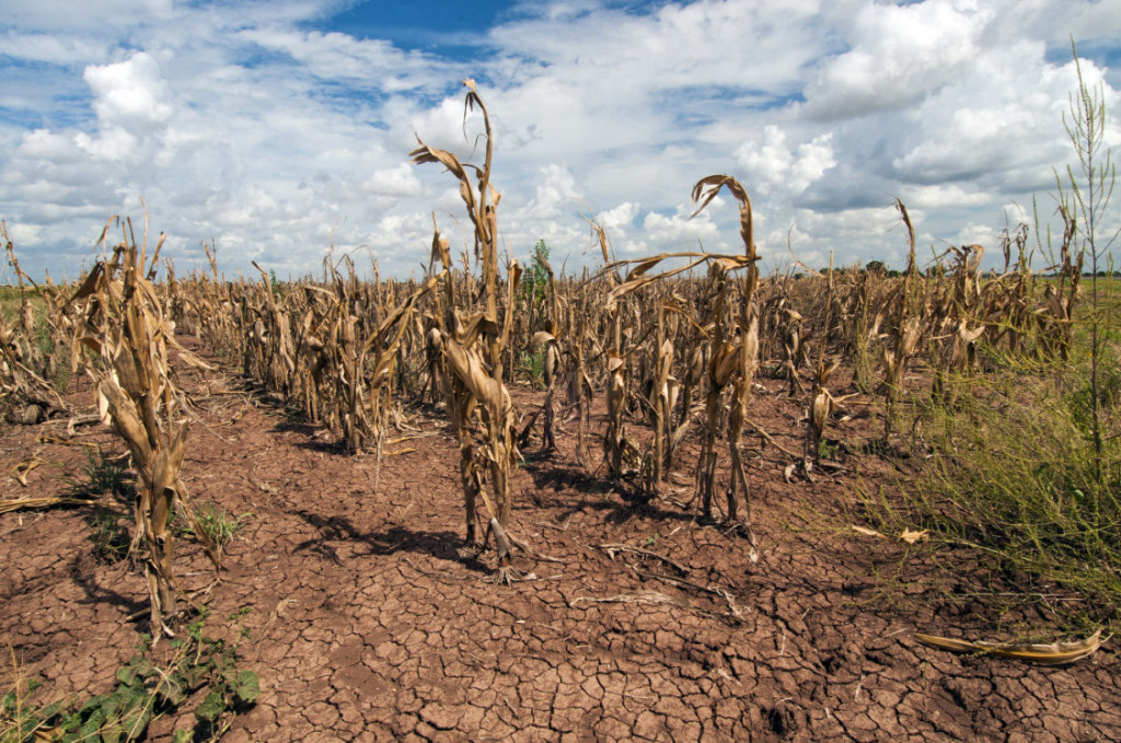 PHOTOGRAPH BY BOB NICHOLS/U.S. DEPARTMENT OF AGRICULTURE