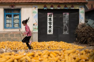 CHINA-ECONOMY-AGRICULTURE-CORN