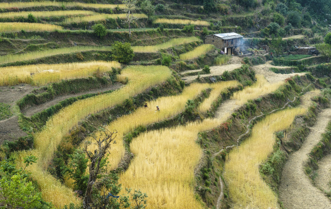 Why getting nepal the right seeds after the earthquakes for What does terrace farming mean